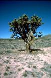 Joshua Tree : Joshua Tree, 3660