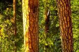 North Cascades : North Cascades, 8015