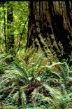 Redwood : Redwood, 9349