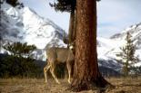 Rocky Mountain : Rocky Mountain, 3158