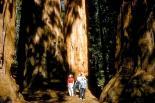 Sequoia & Kings Canyon : Sequoia & Kings Canyon, 2207