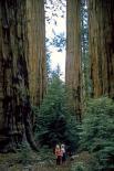 Sequoia & Kings Canyon : Sequoia & Kings Canyon, 4517