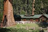Sequoia & Kings Canyon : Giant Forest Museum