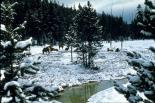 Yellowstone : Yellowstone, 3412