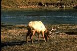 Yellowstone : Yellowstone, 4578